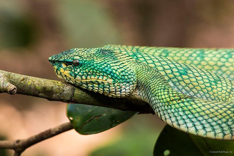 In Borneo, in jungla
