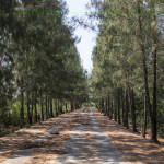 Drumurile insulei
