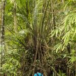Prin jungla