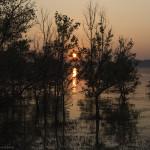 Apusul printre mangrove