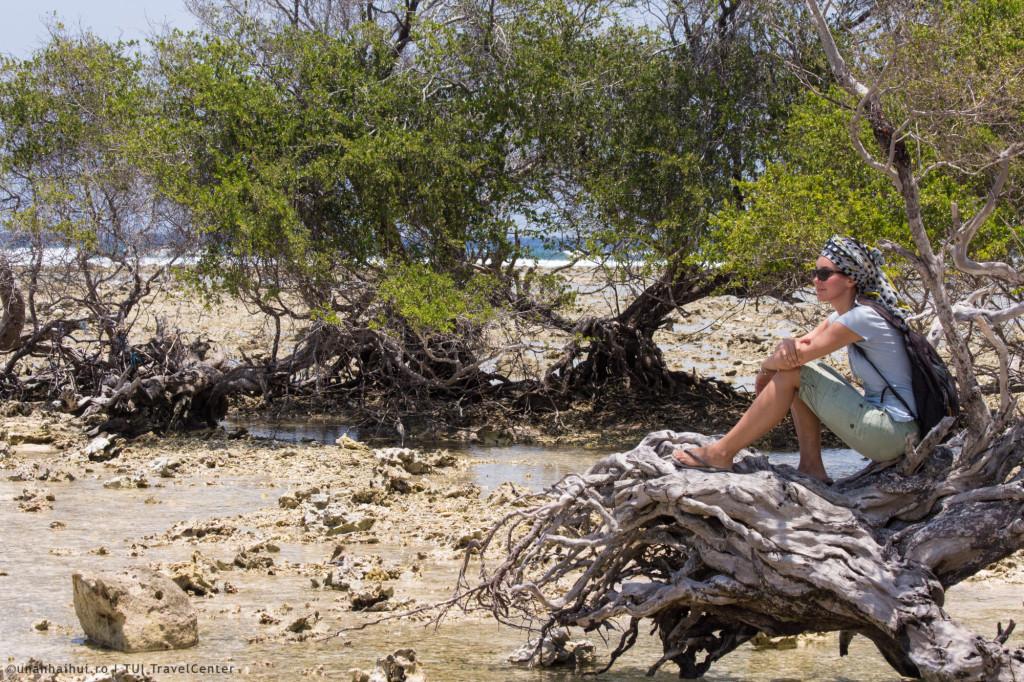 Padure de mangrove cu pasari si crabi ascunsi in cochilii de melci
